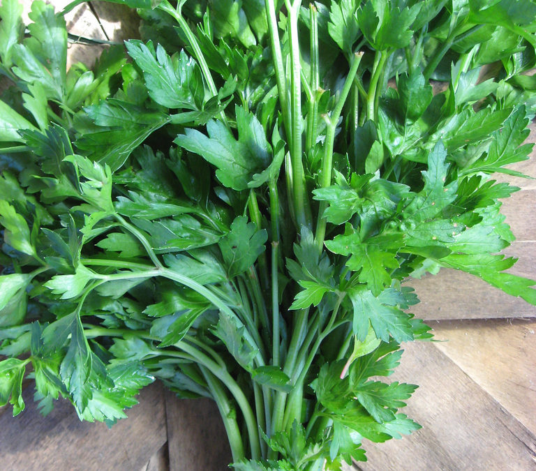 Preserve Fresh Herbs in Oil or Butter