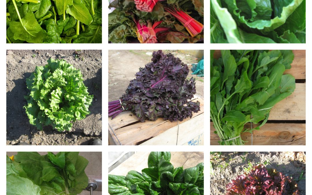 Unpacking and Storing Your Greens and Herbs