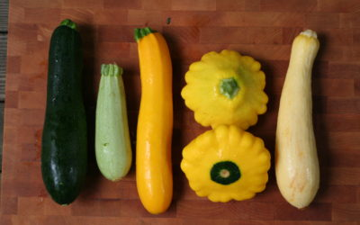What Type of squash is in my summer share?
