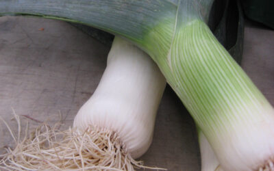 Leeks – How to Prep and Use